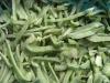 frozen green pepper shredded