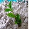calcium superphosphate fertilizer