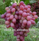 2012 fresh red globe grape