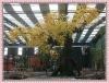 10M Yellow peach blossom tree