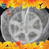 anti scratch spare wheel cover