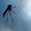 diy mosquito nets
