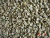 China supplier raw arabica coffee bean plantation for sale!