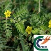 Manufacturers Supply: Tribulus extract (to enhance sexual ability)