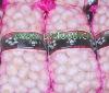 Fresh Pure White Garlic packed in loose mesh bag