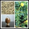 for male tribulus terrestris seed extract