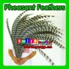 Factory Wholesale 100% Exporting 2012 Hot selling Top Quality Long Pheasant Feathers