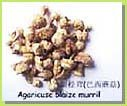 mushroom extract,reishi mushroom extract