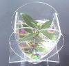 Cute desktop aquarium for desktop use