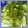 100% Fresh Grape Seed Oil