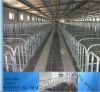 Hot sale FLS Gestation stall for pig with powder painting or galvanized