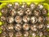 YUGUO 2011(china) FDA canned shiitake mushroom in brine