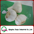 JQ Shandong Crop Fresh Garlic Old Crop
