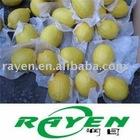 Tasty high quality Eureka Lemon