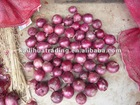 New crops Fresh Red Onions