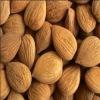 American type almond
