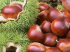 Organic Roasted Chestnut (Shelled) (NEW)