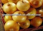 Fresh chinese yellow onion