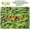 good price frozen green soybean factory export directly