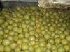 Fresh Pomelo Star Fruit