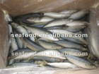 the best pacific mackerel