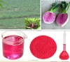 Radish Red Pigment in Wine and Red Radish Coloring in drinks