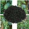 Alga extract organic fertilizer- Seaweed Extract Flake