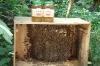 Chinese Bee Honey