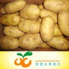 hot sell fresh Holland tasty potato