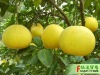 china fresh citrus fruit honey pomelo