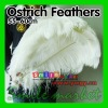 Factory Wholesale 100% Exporting Selected Prime Quality 22-24inch(55-60cm) White Ostrich Feathers for Wedding Centerpieces