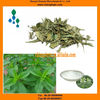 Stevioside Powder-Reasonable Price-Herbal Plant-ISO Certificate Product