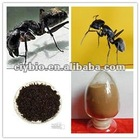 Manufacturer Supply:Hight Quality 10:1 Black Ant Extract