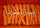 yellow carrot