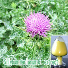 Milk Thistle Extracts/Protect Liver,Silybin/Milk Thistle Power,Silymarin 80% /Milk Thistle