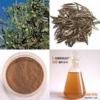 25% Oleuropein powder Olive Leaf extract