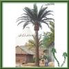 4m Artificial canary Palm Tree, artificial palm tree, artificial tree,palm tree
