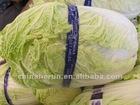 2012 fresh chinese cabbage