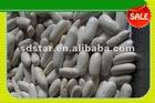 Long White Kidney Bean
