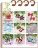 Colorful fashion design ribbon hair clips
