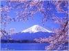 Japanese into English translation Service