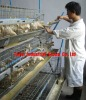 Professional Manufacturer Battery cage
