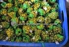 pineapple shopping bags, Folded shopping bags