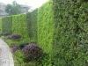 Living wall planting