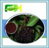 100% Natural Black Elderberry Extract