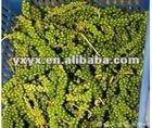 Piper Nigrum Extract Piperine 3%-98% CAS: 94-62-2