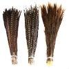 pheasant feather