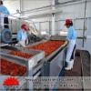 chinese automatic fruit selecting machine