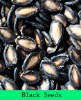 Big/medium/small Black melon seed