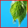 Agriculture hi-efficiency sufactant silicon